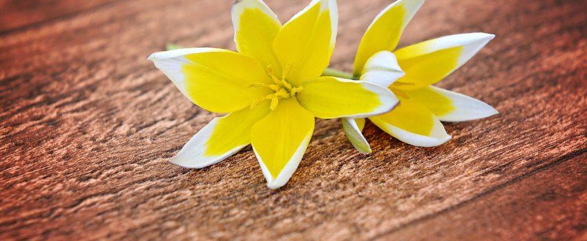 flowers-747206_1280