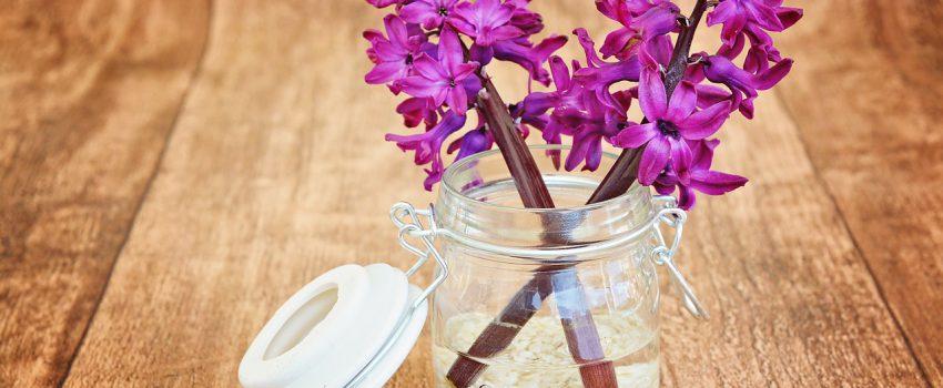 hyacinth-747131_1280